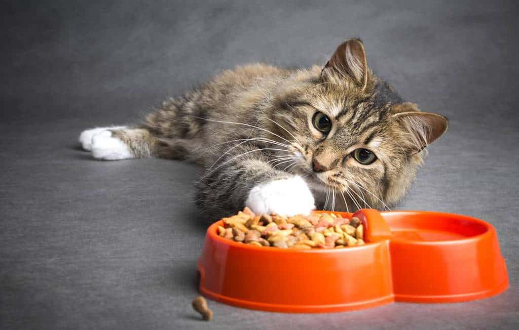 Best Dry Cats Food