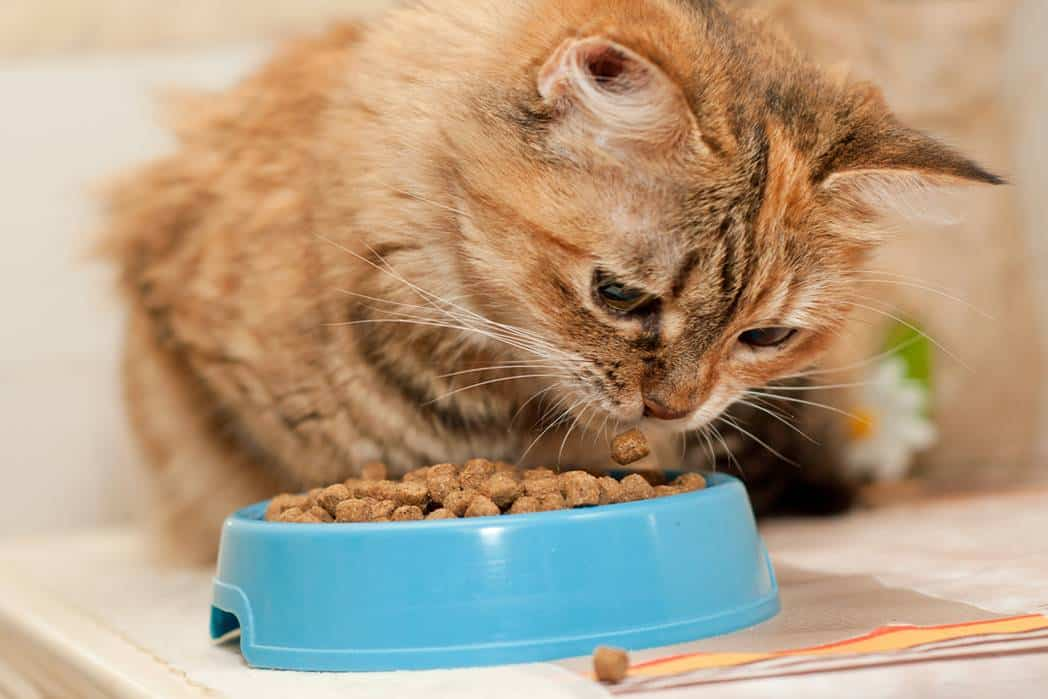 Best High Fibre Cat Food