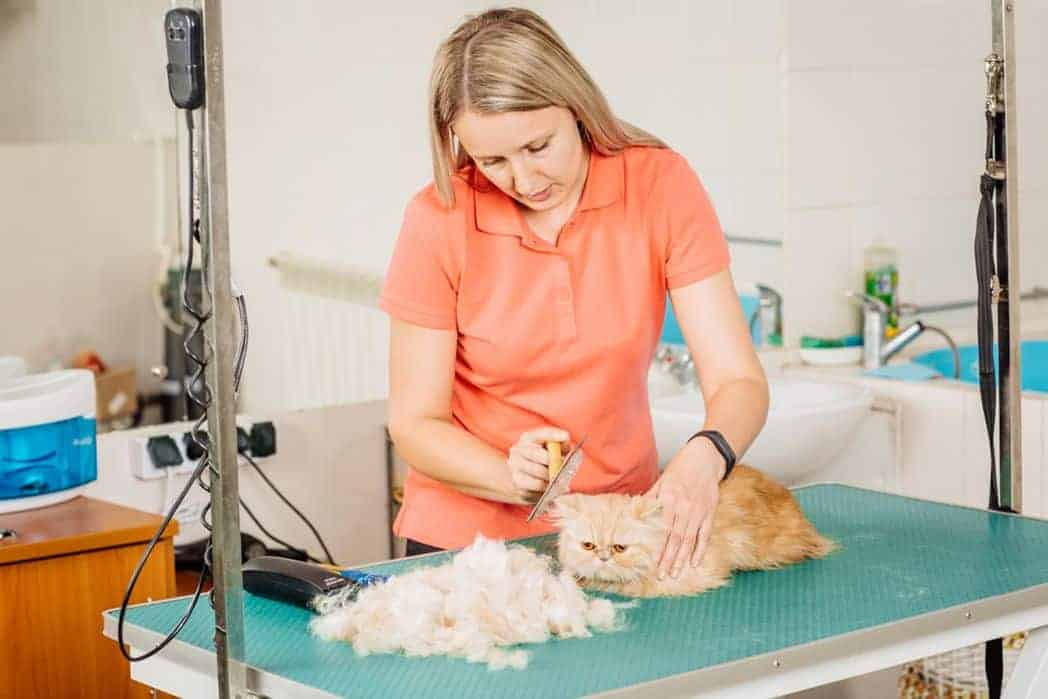 Cat Grooming Tools
