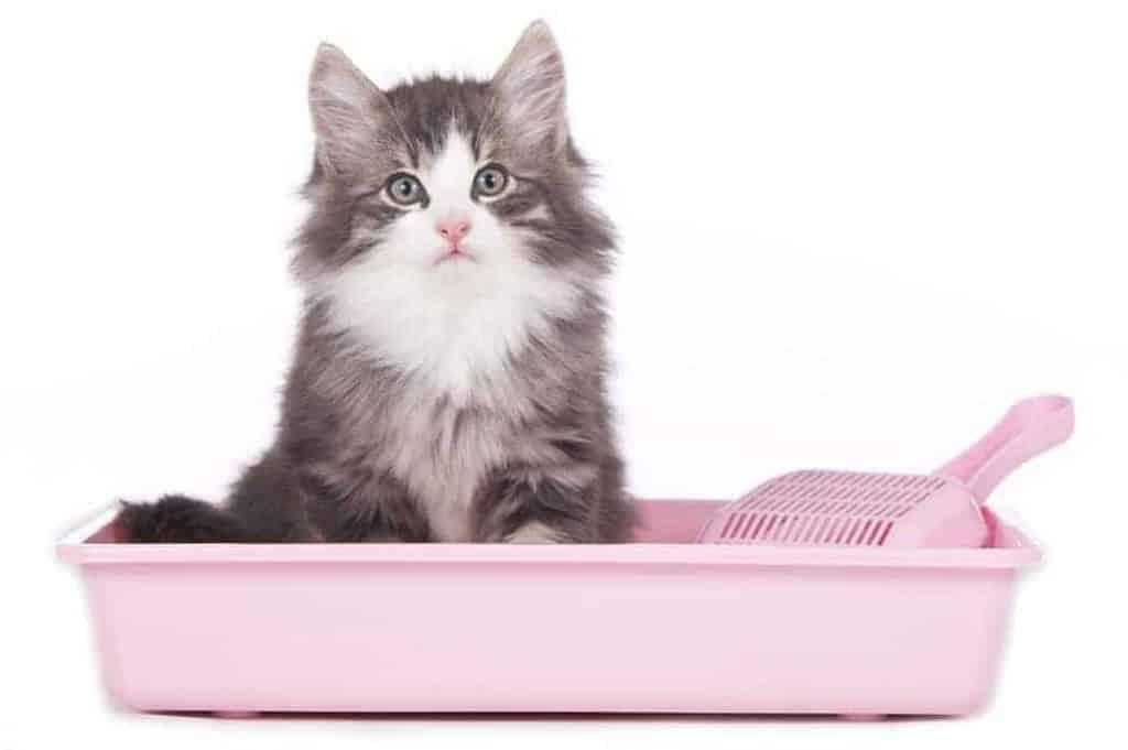 The Cat Litter