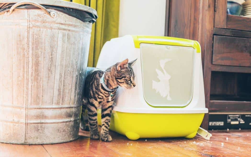Cat Litter box Problems