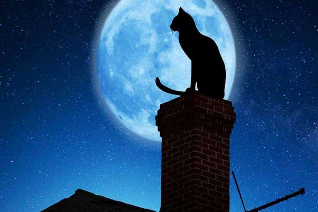 Myths About Cats