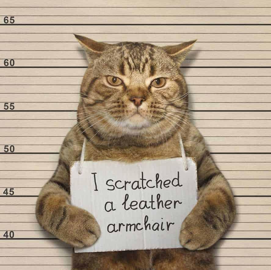 Scratching Cat Armchair