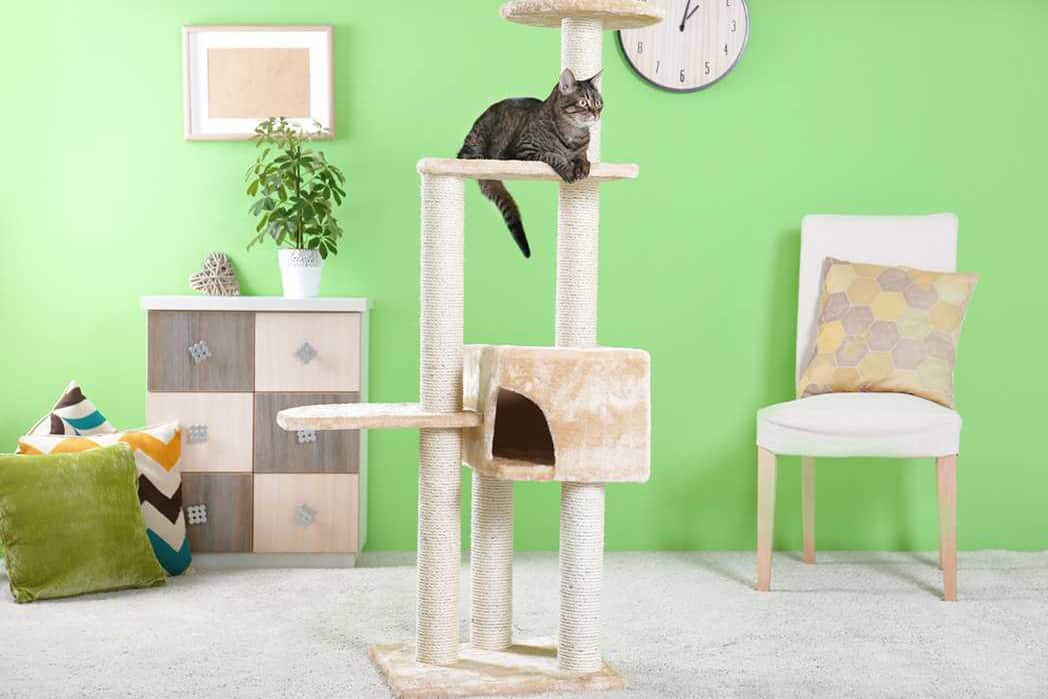 The Cat Tree