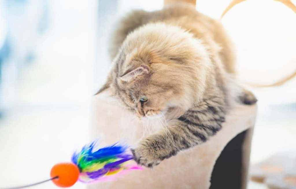 The Toy For Cat