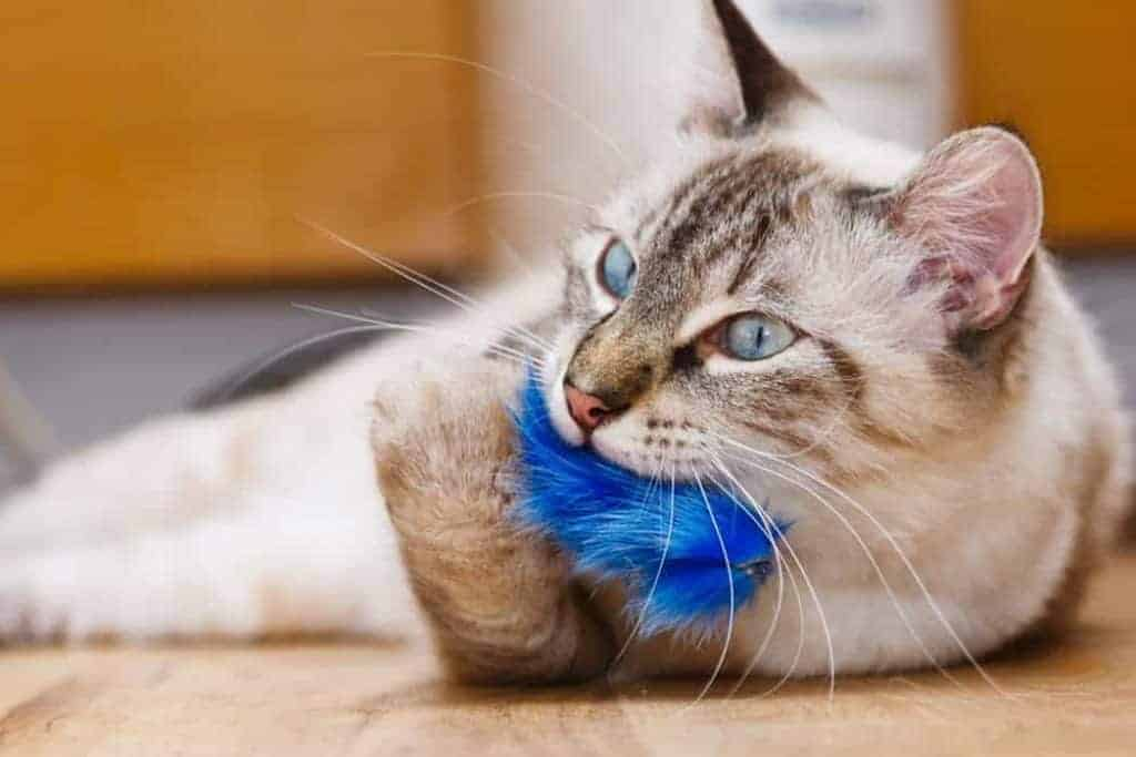 Toy For Cat
