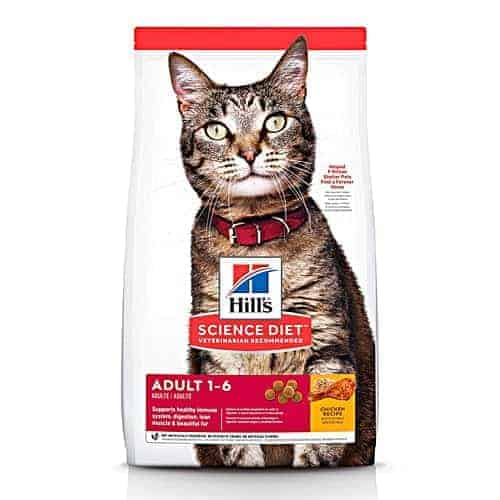 Best Dry Cat Food