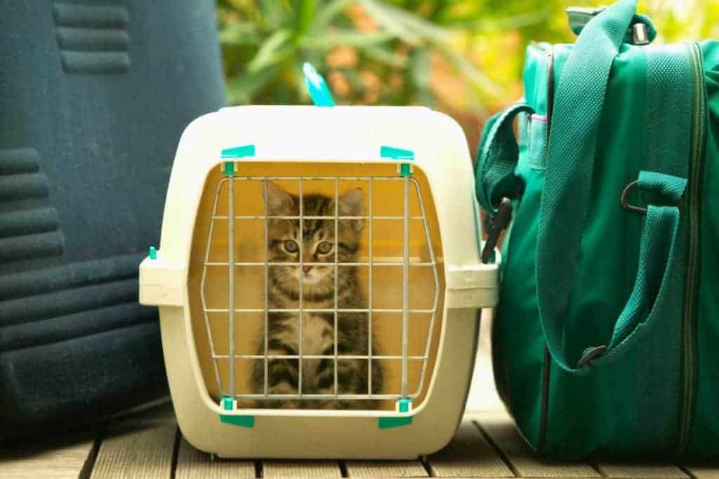 Cat Carrier Woman 700x450