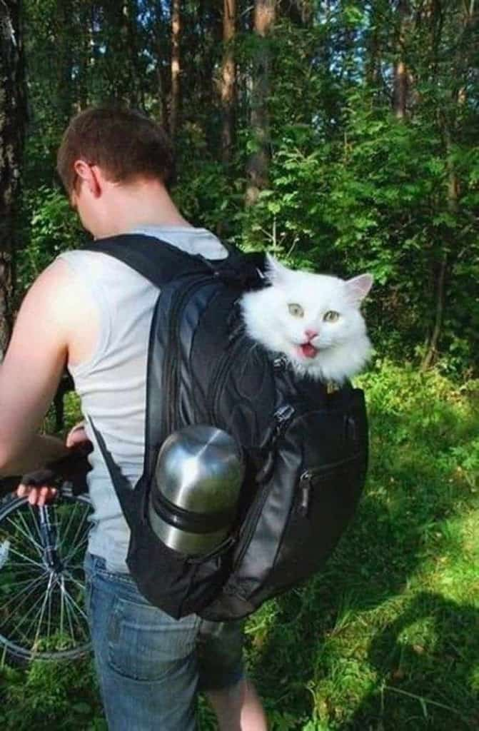 Cat Carrier Woman