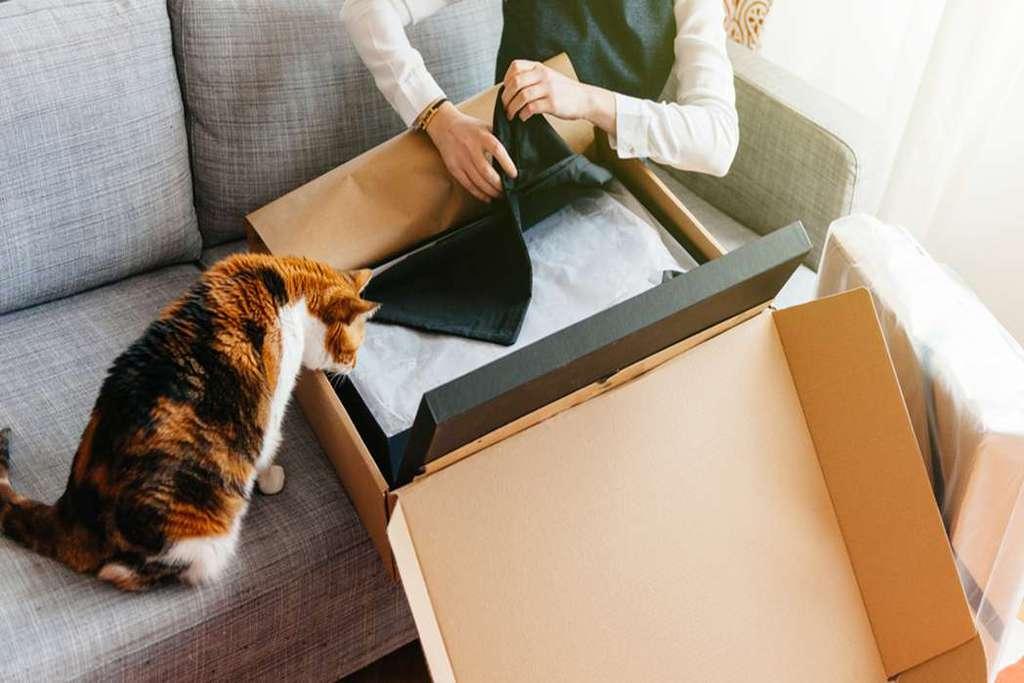 Clumping Cat Litter Reviews