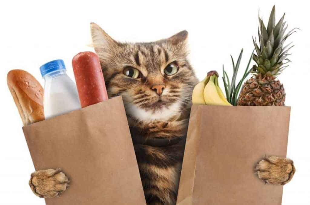 Low Carb Cat Food