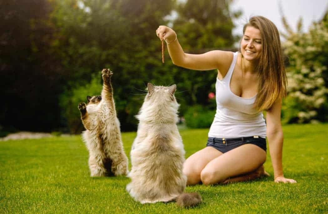The Low Sodium Cat Food