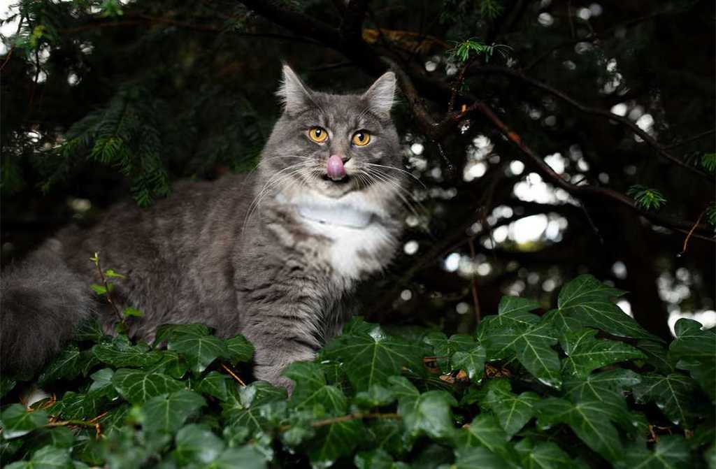 Best Gps Microchip For Cats
