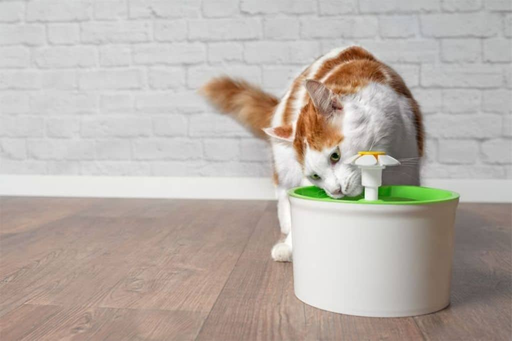 Cat Drinking Water Fountain