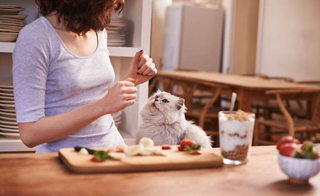 Ensure Diet For Cats