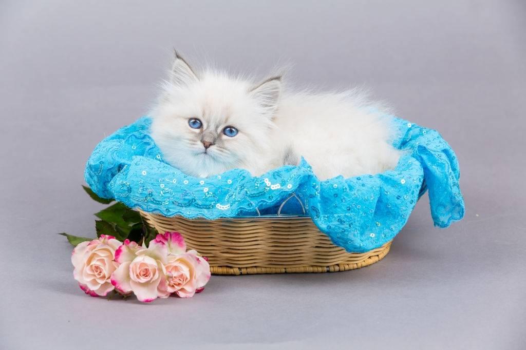 Take Care Of Kittens No Longer Motherless
