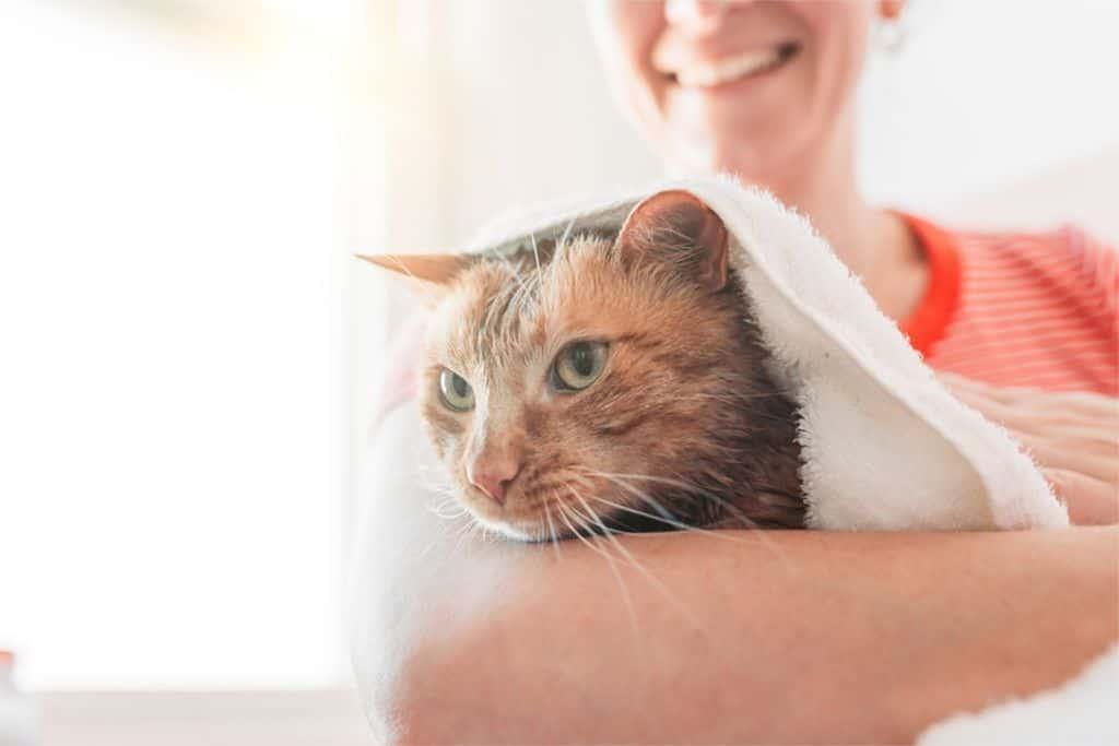 Bathe A Kittens