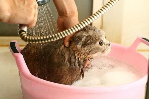 Bathing In Kittens