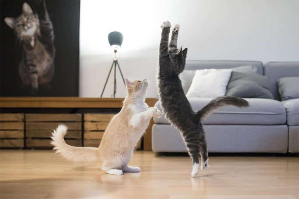 Furniture Items For Cat Lovers