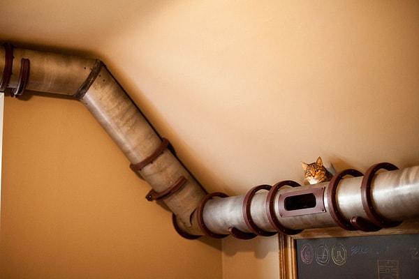 Indoor Plumbing System For Cat