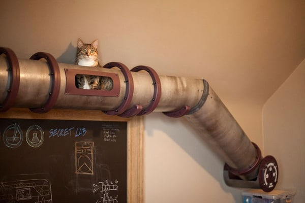 Indoor Plumbing System For Cats