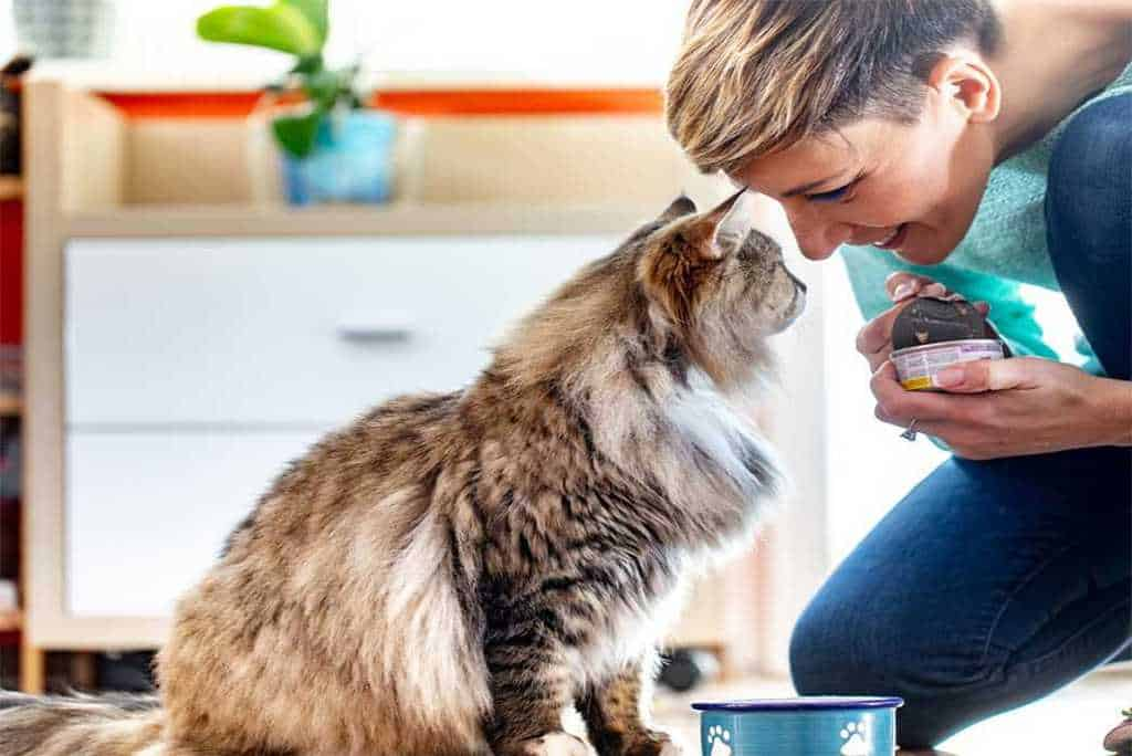 What is Mix Feeding? Five Benefits of Mixing Cat Food
