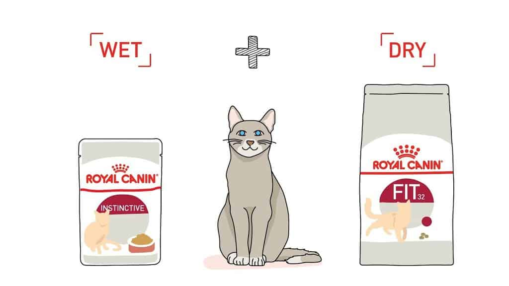 Mixing Cat Food