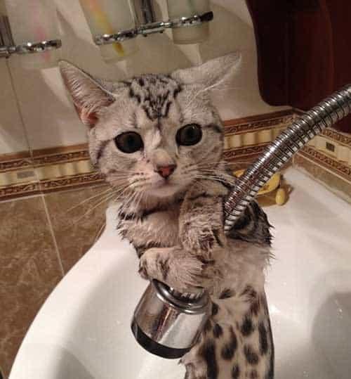 Proper Procedure For Bathing Kittens