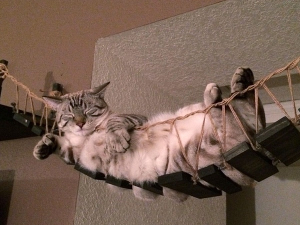 Stairs For Climbing Cat
