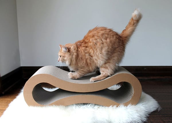 The Bed Fro Cat