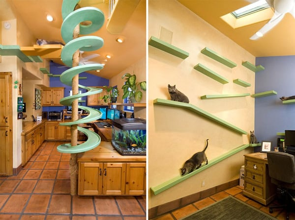 The Dream Home For Naughty Cats