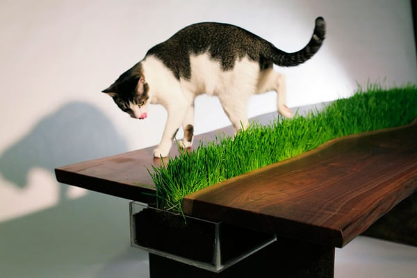 The Lawn Table For Cats