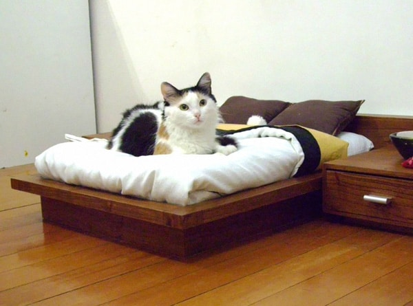 Tiny Bed For Cat
