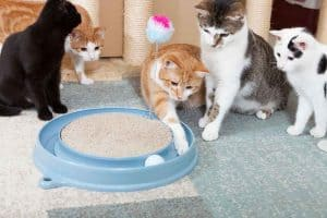 Best Electronic Cat Toys