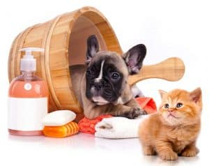 Best Waterless Cat Shampoo