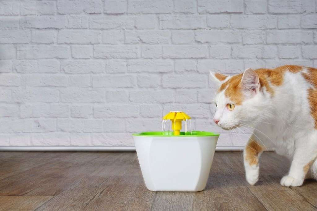 Give The Cat Too Little Water